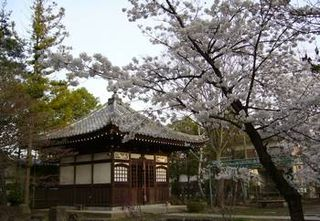 Sakurapictures-kokubunji3